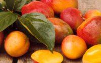 Dlaczego coraz więcej osób wybiera afrykańskie mango