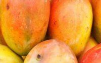 Wszystko o afrykańskim mango